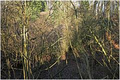 im korkus 284 (beauty of all things) Tags: eschweiler wald forest imkorkus gestrypp gestrüpp scrub wirrwarr tangle entropy dschungel jungle