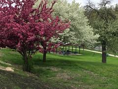 Jaycee Park (joeldinda) Tags: apple iphone 2017 eatoncounty grandledge tree lawn park sidewalk michigan grandriver pavilion shelter 3585 may