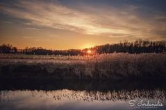 Sunset Dreams (Stathis Iordanidis) Tags: grassland grass countryside nature riverside river stillwater reflections sunlight sun sundown sunset