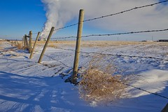 Tumbleweed gate (John Andersen (JPAndersen images)) Tags: bridge calgary canon cold daytime farm fence frost polarvortex steam tumbleweed