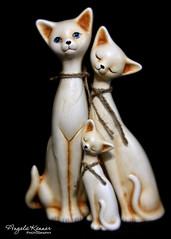 Smile On Saturday...   Threesame (angelakanner) Tags: smileonsaturday threesame cats velvet56 canon70d lensbaby