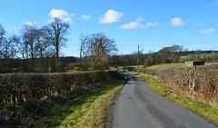 Another Winding Lane, Ayrshire, Scotland. (Phineas Redux) Tags: anotherwindinglaneayrshirescotland scottishcountrylanes scottishlandscapes scottishscenery ayrshirescotland scotland