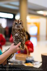 Tawny Owl (Kenjis9965) Tags: sonnar5518za sonnartfe1855 zeiss sonnar t fe 18 f18 55mm 55 sonya7iii sony a7iii a7 iii mark sel5518z owl bird wildlife reserve mall tawny barn northern saw whet