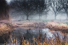Morning mist (Bearded_Photomaniac) Tags: tree lake autumn winter woods idylic fog water sky clouds green beautiful beauty light morning mist hazy grass faded relection reflective outdoors nikon d3400 50mm nikkor national landscape yellow coth5 atmospheric