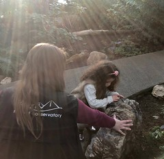 """The curiosity of our 4 year old granddaughter (peggyhr) Tags: guide granddaughter canada alberta edmonton muttartconservatory michelle sophia peggyhr light candid sunbeams """"super~sixbronze☆stage1☆"""" thelooklevel1red """"infinitexposurel1"""" heartawards """"niceasitgets~level1"""""""