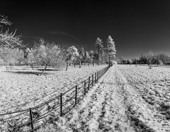Leading II (James Etchells) Tags: barrington court infrared ir landscape national trust black white monochrome landscapes outdoors outdoor natural world nature art artistic creative surreal south west england uk britain tree trees nikon somerset panoramic photography fields field light dark winter spring wintery perspective