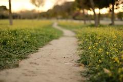 Path (Jonathan_in_Madrid) Tags: fujifilmxt20 2019 aluche fujinonxf35mmf14