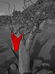 Swimsuit in the desert (Joachim Spenrath Münster, Germany) Tags: na wood dryness travel hot sky trees desert sossusvlei namibia africa heis bäume sand trockenheit wüste theunforgetablepictures himmel strand bw colourd red rot schwimmanzug swimsuit