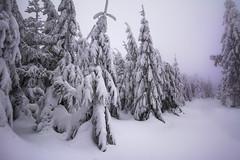 the winter path in Silesian Beskids / Poland (stoplamek) Tags: beskidśląski silesianbeskids silesianvoivodeship poland polska winter zima