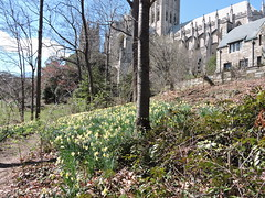 DSCN5783 (littlereview) Tags: dc littlereview 2019 nationalcathedral church flower garden spring blog