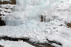 Ice Falls (Bracus Triticum) Tags: ice falls アルバータ州 alberta canada カナダ 12月 december winter 2018 平成30年 じゅうにがつ 十二月 jūnigatsu 師走 shiwasu priestsrun