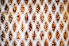 diamonds (primemundo) Tags: zigzag bokeh cage grate diamonds rust paintchips rustchips dog background odc