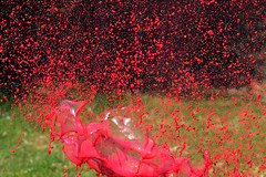 Rouge explosif . (mousse.annick) Tags: peinture rouge explosion sony gouttes bokeh red