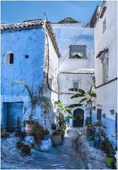 554- OASIS EN XAUEN - MARRUECOS - (--MARCO POLO--) Tags: marruecos ciudades exotismo rincones curiosidades calles arquitectura colores