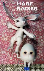 He's been working out (bentwhisker) Tags: dolls bjd resin anthre hare rabbit bunny egg conarium soom neoangelregion humptydumpty 5313