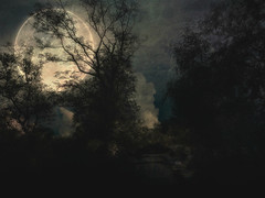 After the Rain 2 (Bill Eiffert) Tags: moon moonlight shadows trees painterly painting overlays manipulation reedit