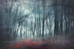 escape route (Dyrk.Wyst) Tags: 2016 deutschland germany landschaft laub licht natur nebel stimmung wald winter wuppertal atmosphere feucht fog forest landscape leaves mood nature outdoor woodland creativephotography conceptual composition dreamy fineart surreal photoshelter branches foliage