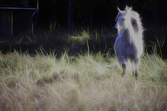 Re-Entry to Earth (sherry landon non stop creations) Tags: white andalusian stallion sparks sherry landon non stop creations grass running horse