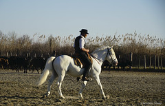 _DSC0612 (chris30300) Tags: camargue cheval