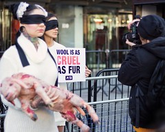 **Don't pull the wool over our eyes!** (Col!) Tags: canon700d niftyfifty streetphotography street london londonfashionweek thestrand protest animals peta fashion lamb sheep reportage