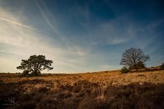 MMF-20190217131131 (MarcelMengerFotografie) Tags: nikond800e nikon veluwe posbank tokina landschap nature trees landscape