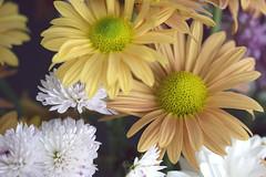 Dispuestas (José Ramón de Lothlórien) Tags: corazón heart polen pistilos interior flor flores flower flowers beauty belleza colores calidez