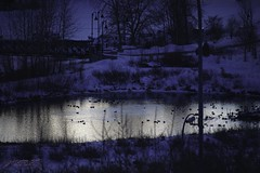 blue hour pond (zawaski -- Thank you for your visits & comments) Tags: alberta serves beauty 4hire naturallight noflash canada zawaski©2019 calgary love ambientlight lovepeace editing canonefs55250mmf456isstm