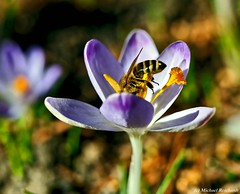 Spring / Frühling (Mike Reichardt) Tags: frühling flower flowerpower blüte blossom blume nahaufnahme natur nature nah garden garten macro makro dwwg