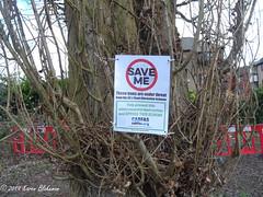 February 28th, 2019 Save me (karenblakeman) Tags: caversham uk floodalleviationscheme environmentagency poplartrees notice cabfas campaignforabetterfloodalleviationscheme february 2019 2019pad reading berkshire