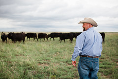 Farmer Looking at his Herd of Wagyu Cattle (kaylasmithphoto) Tags: cows cattle beef herd animals livestock steer grass texas field pasture agriculture ag farm farming production producing wagyu meat cow cowboy