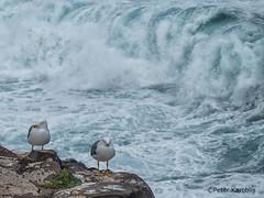 Gran Canaria - waves and seagulls (peterkaroblis) Tags: grancanaria wellen waves sea blue rock felsen möwe seagull
