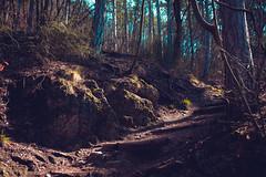 KRIS8026 (Chris.Heart) Tags: erdő buda budapest túra természet forest nature hiking