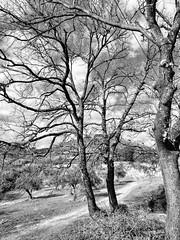 """I PROFUMI DEL CIELO. ERRARE!"" LXXIX /12 #artcontemporary #urban #photography #photographer#fotografiaartistica#photooftheday #photographers #artphotography#fotografia#photoart#photo #city #art #artecontemporanea #arteconcettuale #conceptual_art_gallery#a (paolomarianelli) Tags: city paolomarianelli artphotography artwork photographers arteconcettuale art urbex find photooftheday conceptualartgallery fotografiaartistica artistcommunity artcriticsr artecontemporanea artcontemporary urbexphoto photography sky fineartphotobw artist urban photo artgallery photoart spring fotografia photographer exit curator"