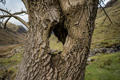 Holy Tree (DJNanartist) Tags: nikond750 nikontamron1735mm lakedistrict anartist nikon28300mm langstrath eaglecrag