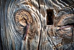 Pura textura. (Miguel Angel SGR) Tags: detalle detail textura texture wooed wood madera oxido oxide door puerta cerradura lock lockdoor texturas nikon d300 d3000 old viejo antique antiguo iron hierro miguelangelsgr miguelonphotography macro closeup