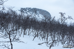 The Cliffs of Saana (kevin-palmer) Tags: kilpisjärvi finland finnishlapland arctic europe winter march snow snowy cold cloudy overcast nikond750 tamron2470mmf28 enontekiö birchtrees forest saana scandinavianmountains