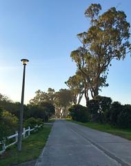 Eucalyptus trees on Leisure Isle. (Stephen Viszlai) Tags: knysna southafrica africa amanzilodge gardenroute adventure travel explore eucalyptus peaceful