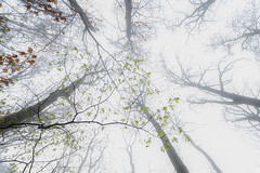 Autumn vs spring (Fabien Husslein) Tags: luxembourg luxemburg letzebuerg frisange freiseng foret forest wood canopy branches trees arbres mist fog brouillard leaves feuilles nature