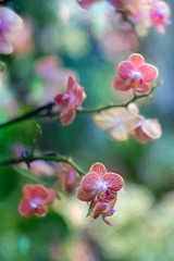 Orchids (JMS2) Tags: orchids flowers spring display artsy nature bokeh