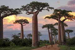 2012_Madagascar (s_andreja) Tags: