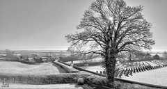 Snow in the countryside (ianzphotography) Tags: tree countryside blackandwhite fields snow winter cold