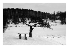 Yar_0051 (vladmarukhin) Tags: nikon nikkor nikond80 nature snow winter wideangle way weather bw blackwhite minimalism focus forest frame landscape outdoor 35mm road light