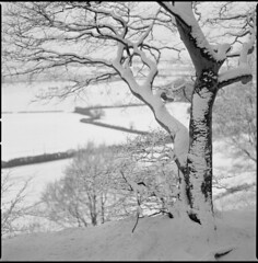trees and snow (steve-jack) Tags: haaselblad 501cm 80mm cb kodak trix 400 film 120 6x6 medium format perceptol epson v500