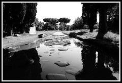 Roma - Appia Antica (claudiobertolesi) Tags: roma appiaantica ancientrome road strada pino riflessi blackwhite