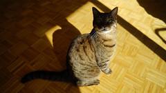 DSC01088 (iocatco) Tags: cat kitten cats sony a7