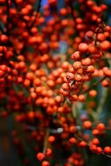 Very berry (halifaxlight (catching up)) Tags: hungary budapest berries floraldisplay display hotel lobby decorative red bokeh