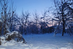 Snow / after sunset (CFR2100CP) Tags: snow after sunset zăpadă după apusul soarelui blue hour sky ice winter hibernal surnise sun stea apus romania ger ninsoare poteca elita 20 epic buftea bucuresti terra calea lactee milk aurora borealis polar light beautiful colors steaua alpha centauri norul lui perfect buciumeni city omat nea la capatul pamantului polul pol north austal portocaliu amurg ora albastra portocala mare rosiatiaca orizont jupiter saturn kripton argon uranus moon cod crepuscul zorii bluetec bluehour