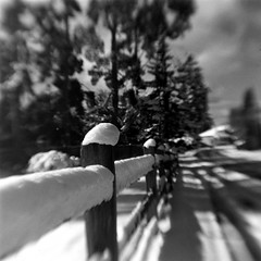 "Snowy Fence (bac1967) Tags: kodak hawkeye ""kodak ""ilford film"" hp5"" berrenol beerol caffenol film ""toy camera"" bw monochrome monotone hawkeye"" brownie brownie"" panfilm bokeh dof depth bothell bothellwa blackandwhite blackandwhitefilm squareformat 6x6 620 620film depthoffield blur beerfilmdeveloper kodakbrowniehawkeyeflashmodel snow fence scenery lensflip flipped hacked"