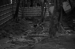 February 19, 2019_kyoto_15 (Satoshi Kondo) Tags: bw bnw blackandwhite blackandwhitephotography blackandwhitephoto bnwphoto bwphoto bnwphotography bwphotography blackandwhitepoto blackandwhitepotography monochrome filmphotography filmcamera filmphoto film filmpoto leica leicaphoto leicaworld leicam3 street streetphoto streetsnap streetphotography summicron summicron50mm kyoto japan 京都 白黒 フィルム フィルム写真 フィルムカメラ ライカ ライカm3 ズミクロン kodak