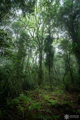 Springbrook National Park (Dreamtime Nature Photography) Tags: waterfalls falls water jungle rainforest landscape canon dreamtimenaturephotography springbrooknationalpark australia qld queensland